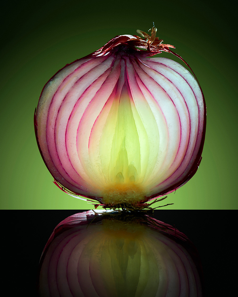 macro red onion texture studio photography